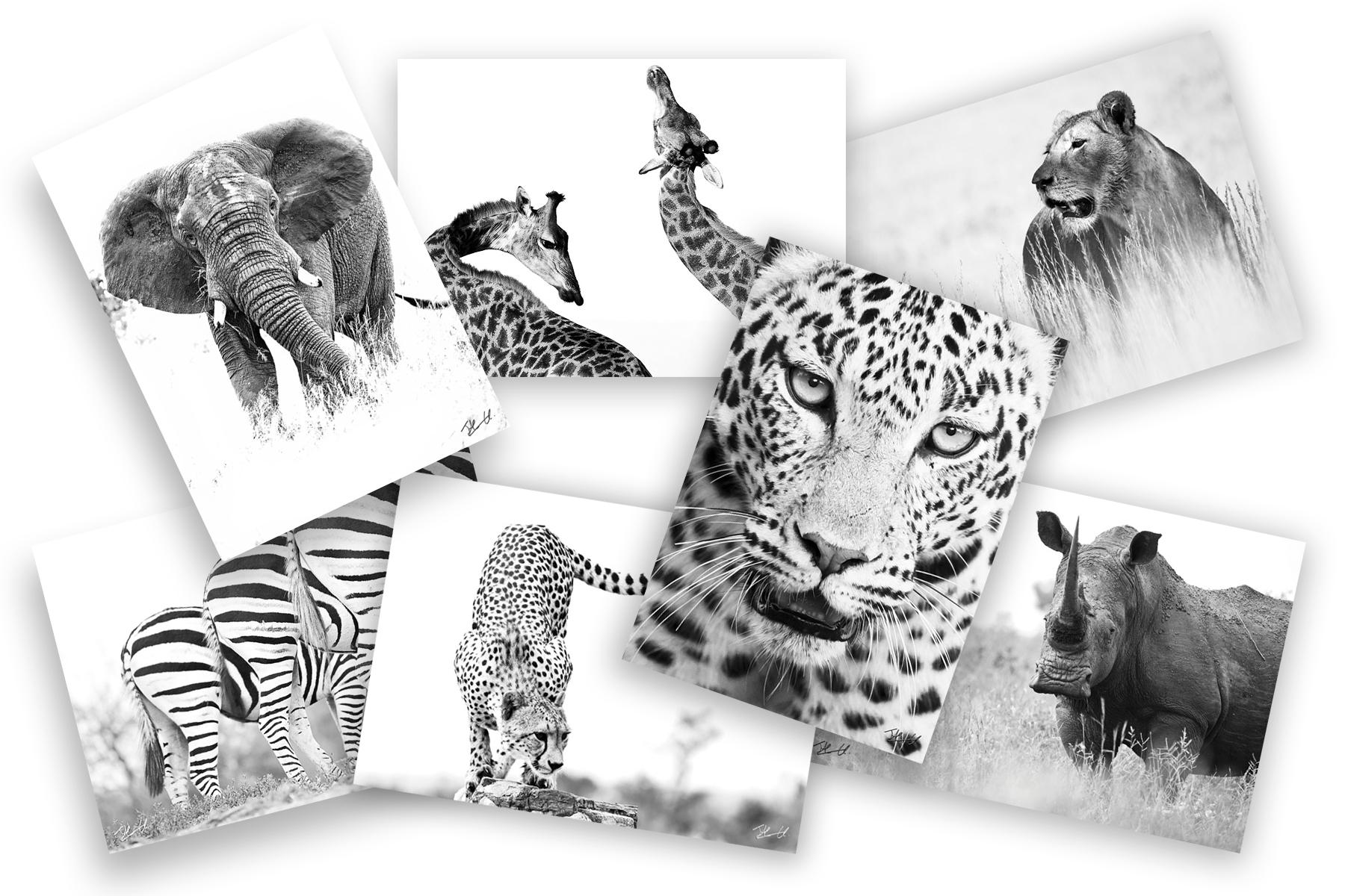 Postcards South African Widlife Postcard Ranges